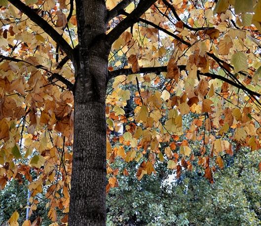 Em sua outonal beleza estão as árvores 01