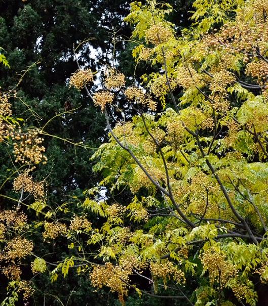 Em sua outonal beleza estão as árvores 04
