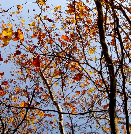 Em sua outonal beleza estão as árvores 06